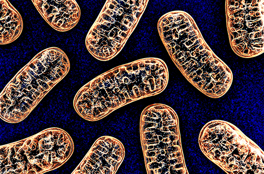 Cell biology: Maintaining mitochondrial resilience